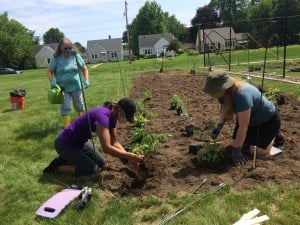 New Life Presbyterian Church garden partnership - planting the produce