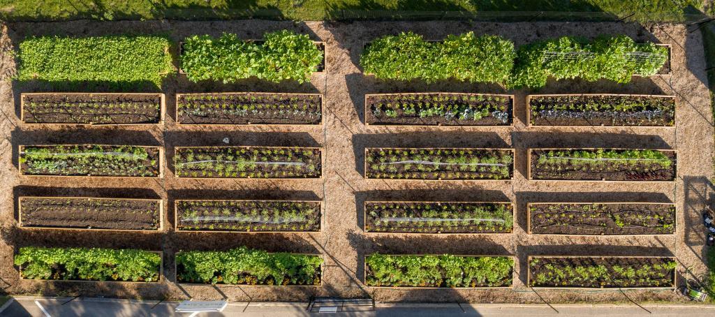 Grow & Give Garden